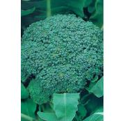 Unwins Broccoli (Calabrease) Green Magic