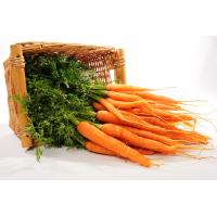 Carrots (Bunched) image