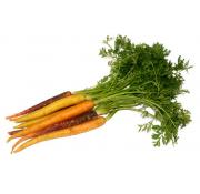 Carrots - Rainbow (Bunched)