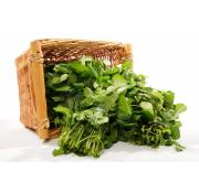 Watercress - Bunch